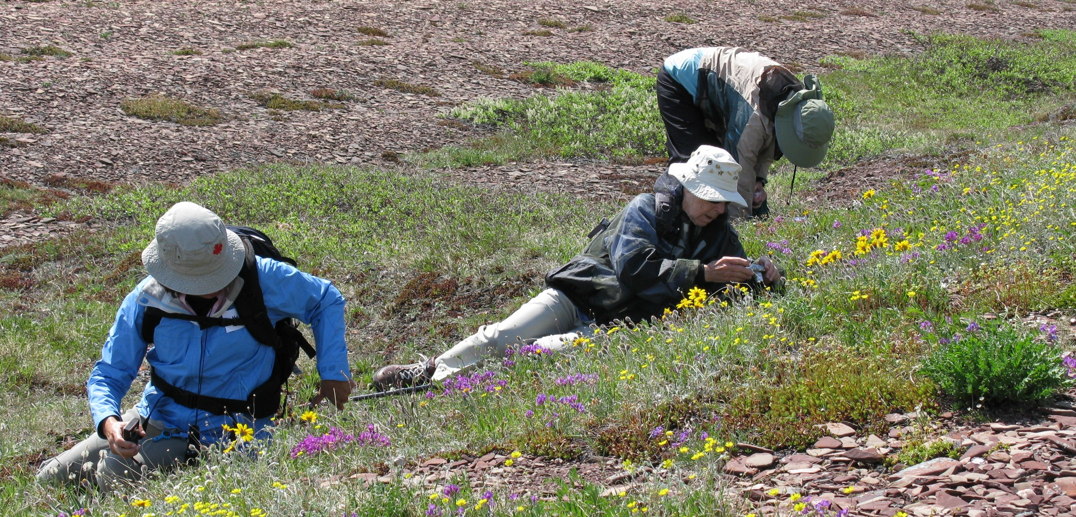 wildflower photographers