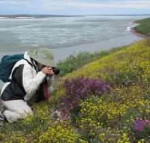 wallflower photographer